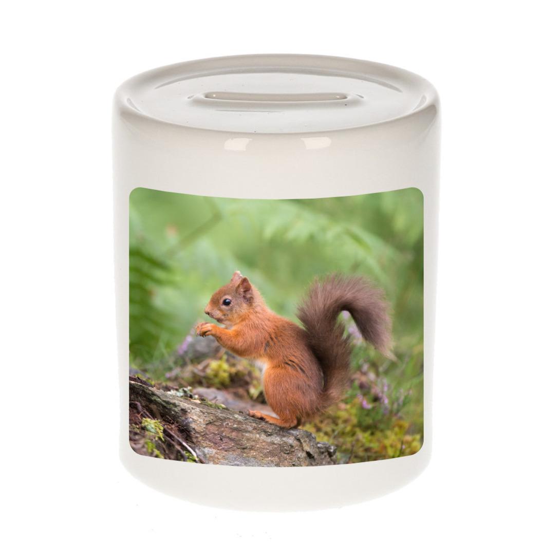 Foto eekhoorntje spaarpot 9 cm - Cadeau eekhoorntjes liefhebber