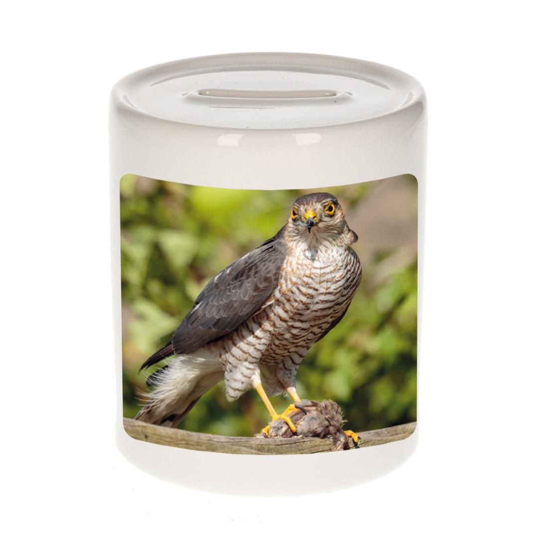 Foto havik roofvogel spaarpot 9 cm - Cadeau roofvolgel liefhebber